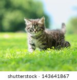 Stock photo cute little cat playing on the grass 143641867