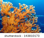 Coral Reef With Great Yellow ...