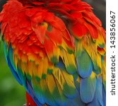 scarlet macaw feathers. | Shutterstock . vector #143856067