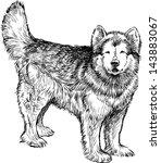 husky | Shutterstock .eps vector #143883067