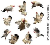 set of cock  hen and chicks on... | Shutterstock . vector #143964883