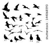 gull silhouette | Shutterstock .eps vector #144068593