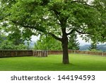 one single tree with green lawn ... | Shutterstock . vector #144194593