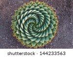 Spiral Aloe   Lesotho...