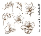 Hand Drawn Orchid Flowers...