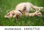 Stock photo little cat playing in grass selective focus shallow dof 144317713