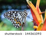 butterfly and flower | Shutterstock . vector #144361093