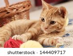 Stock photo little cat playing with wool on the carpet 144409717
