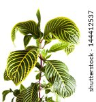 green stem and leaves close up... | Shutterstock . vector #144412537