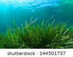 Seagrass Underwater Background