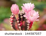 Cactus And Flower