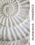 Ammonite Prehistoric Fossil On...