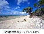 Tropical Coral Beach