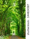 Scenic Road Through Green...