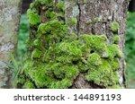 Moss Growing On Tree In Rain...