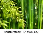 Asian Bamboo Forest With...