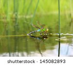 Colorful Dragonfly On A Plant...