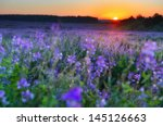 summer sunrise over big field... | Shutterstock . vector #145126663