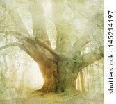 vintage forest landscape... | Shutterstock . vector #145214197