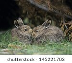 two young hares sitting by bush | Shutterstock . vector #145221703