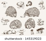 Hedgehog. Set Of Vector Sketches