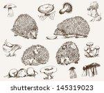 Hedgehog. Set Of Vector Sketches