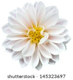 white flower | Shutterstock . vector #145323697