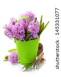 beautiful hyacinths in vase and ... | Shutterstock . vector #145331077