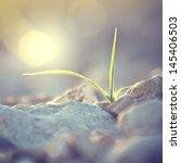 Vintage Plant Grows In Rocks...