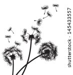 three dandelions with seeds... | Shutterstock .eps vector #145433557