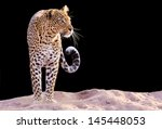 color image of a leopard...   Shutterstock . vector #145448053