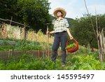 girl picking the fruit from...   Shutterstock . vector #145595497