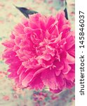 pink peony in vintage style | Shutterstock . vector #145846037