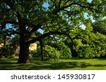 the world's biggest tree   Shutterstock . vector #145930817