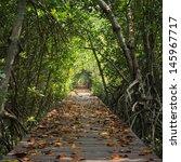 Wood Bridge In Mangrove Forest...