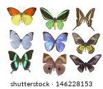butterfly on white | Shutterstock . vector #146228153