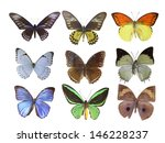 butterfly on white | Shutterstock . vector #146228237