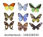 butterfly on white | Shutterstock . vector #146228243