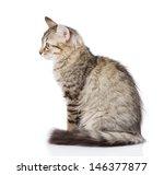 Stock photo fluffy gray beautiful kitten isolated on white background 146377877