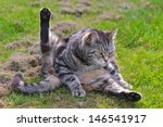 Cat In Funny Position