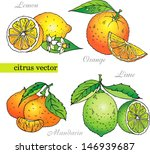 citrus vector set from orange ... | Shutterstock .eps vector #146939687