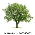 Isolated Deciduous Tree A White - Fine Art prints