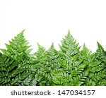 fern leaf on white background | Shutterstock . vector #147034157