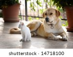 Stock photo dog and cat 14718100