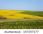 bright yellow rapeseed fields... | Shutterstock . vector #147257177