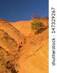tree growing on an orange ocher ...   Shutterstock . vector #147329267