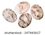 fossil jasper is distinguished... | Shutterstock . vector #147465617