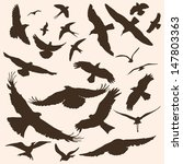Vector Silhouettes Of Birds ...