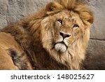 lion  panthera leo   | Shutterstock . vector #148025627