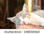 Stock photo small kitten sleeping on the bench 148036463